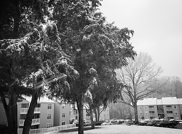 SnowTrees2