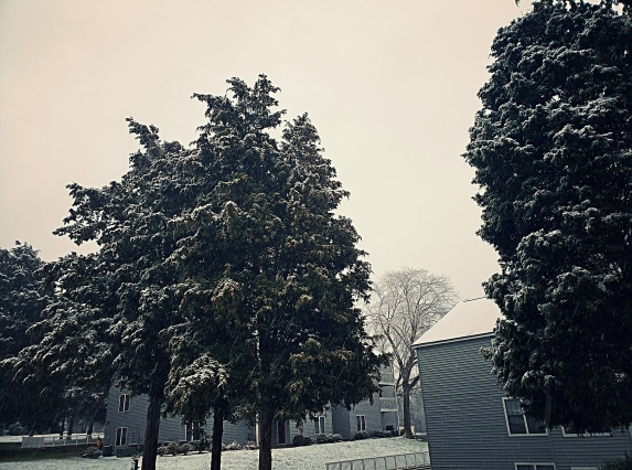 SnowTrees3